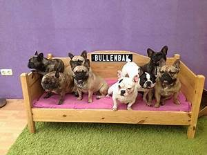 bully bed frenchies 3 gt 4 pinterest With bully beds