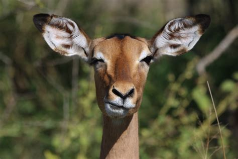 close  photography  giraffe  stock photo