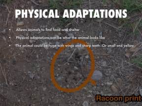 Physical Animal Adaptations Examples