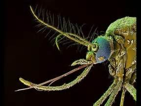 蚊 に 刺され やすい 人 の 特徴