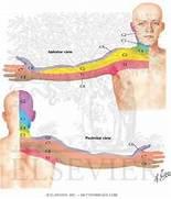 Cervical Dermatome Map...Dermatomes Netter