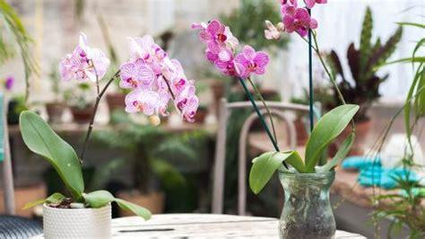 comment entretenir une orchidée comment bien entretenir une orchid 233 e vid 233 o