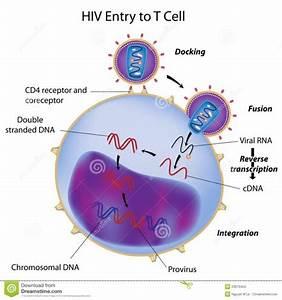 Hiv Labelled Diagram