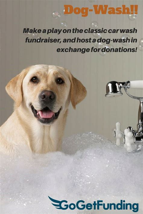dog wash   play   classic car wash fundraiser
