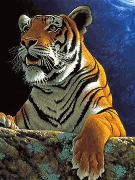 Animated Tiger Nokia Mobile Wallpapers 240x320 Mobile