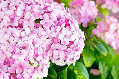 Flowers Popular Spring Florists Yay Provide Directory