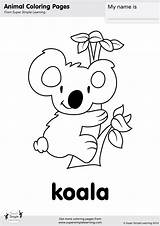 Koala Coloring Pages Cute Baby Bear Koalas Animal Super Simple Printable Worksheets Animals Bears Printables Kindergarten Sheets Activities Learning Christmas sketch template
