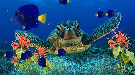 sea turtle underwater flora fish art wallpaper hd