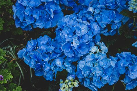 flower background images  hd backgrounds