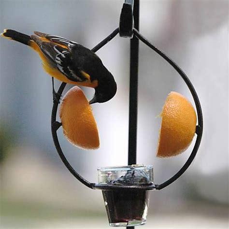 duncraft com metal ring fruit jelly feeder