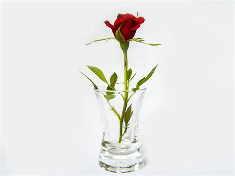 Plant, Glass, Vase, Rose, Red, Flowerpot