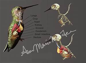 Medical Illustration On Behance