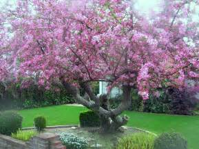 houston florist malus floribunda crab apple yalca fruit trees