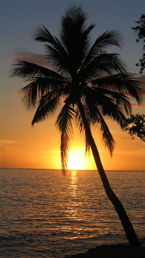 palm tree sunset wallpaper wallpapersafari