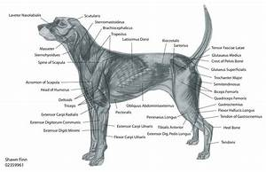 17 Best Images About Animal Anatomy On Pinterest