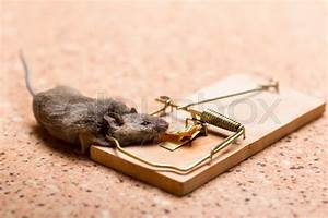 Mouse Caught In The Mouse Trap On The