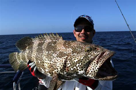 grouper cod australia fish catch fishing groupers lure similar caught howtocatchanyfish flowery