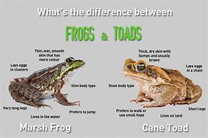 What U0026 39 S The Difference Between Frogs And Toads