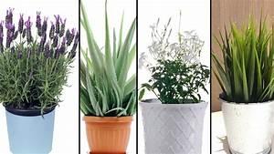Pflanzen Luftreinigung Schlafzimmer : 5 pflanzen die du in deinem schlafzimmer haben solltest um besser schlafen zu k nnen youtube ~ Eleganceandgraceweddings.com Haus und Dekorationen