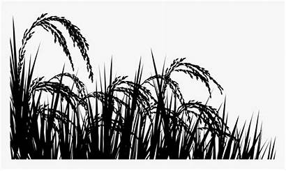 Rice Field Transparent Pngitem