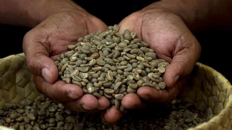 National Coffee Sector Development Plan Supported By Adb