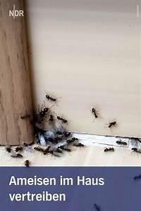 Ameisen Im Haus Ursache : ameisen so vertreibt man die l stigen krabbler ameisen ~ A.2002-acura-tl-radio.info Haus und Dekorationen