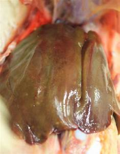 Image  Green Liver