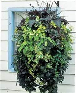 Best Plants For Winter Hanging Baskets Garden Design Ideas