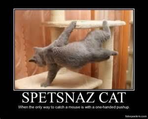 cat poster spetsnaz cat demotivational poster fakeposters