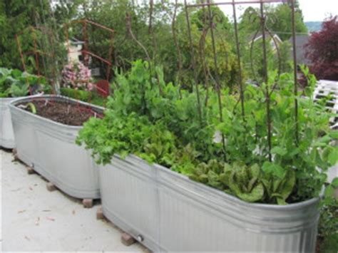 edible landscaping cascadia edible landscapes