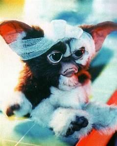 Pin by Jasmine Yolo on Gremlins so cute. | Pinterest ...