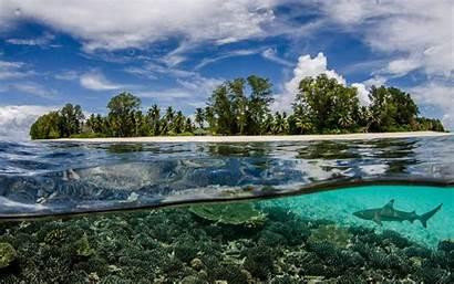 Underwater Seychelles Beach Shark Nature Sea Split