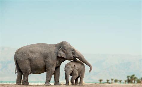 transcend media service crying elephants  giggling