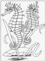 Coloring Pages Realistic Adult Seahorse Adults Horse Sea Printable Drawing Colouring Realisticcoloringpages Ocean Sheets Drawings Horses Seahorses Books Popular Az sketch template