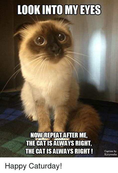 Caturday Meme - funny caturday memes of 2017 on sizzle playtime