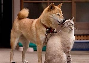 Puppy Love   Cuteness Overflow