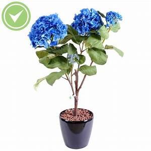 Plante Fleurie Intérieur : plante d 39 appartement originale maison et fleurs ~ Premium-room.com Idées de Décoration