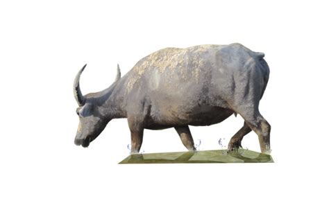 buffalo png transparent images png
