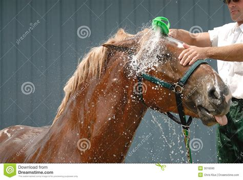 equine shower shower stock photo image 3016590