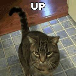 gif cat funny funny gif lol gif coffee eye amazing ...
