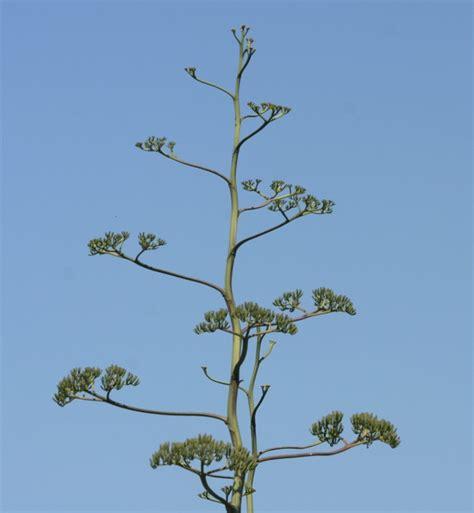 Madagascar 2007 plants