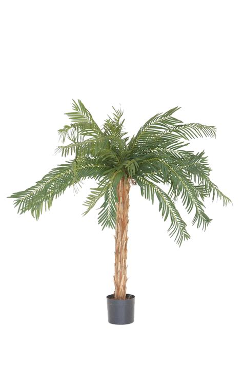 table top palm tree table top palm tree fresh event hire