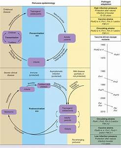Pertussis Diagram