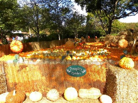 Pumpkin Patch Near Spring Tx by Spring Blooms Picture Of Dallas Arboretum Amp Botanical
