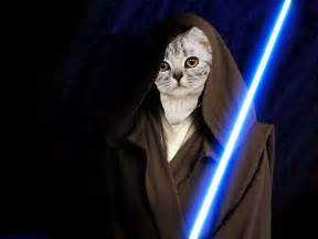wars cat sci fi cats the blogg