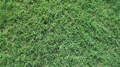 common grass types top 28 common grass types the 3 most common grass types in jacksonville fl the 4 most