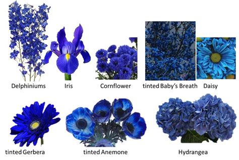 types of blue flowers small blue flower names blue flowers male models picture