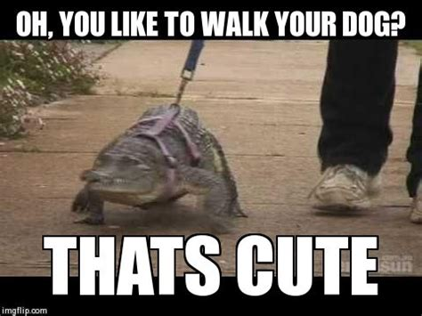 Oh You Dog Meme Generator - image tagged in croc imgflip