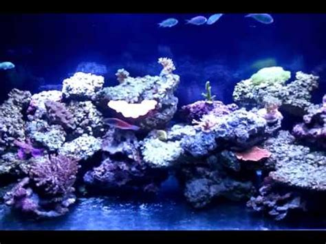 how to lower nitrates how to lower nitrates in a reef tank how to save money