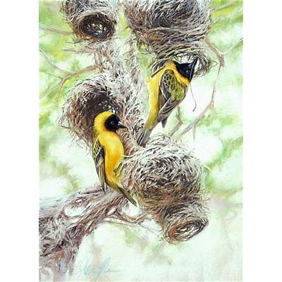 Two African masked weavers at nest building - Painting Art